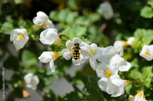 Aluminium Bee Biene auf Blüte