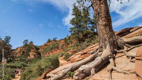 Plexiglas Diepbruine Ziona National Park