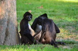 monkeys in the grass - 182195648
