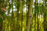 Bamboo stick in green background