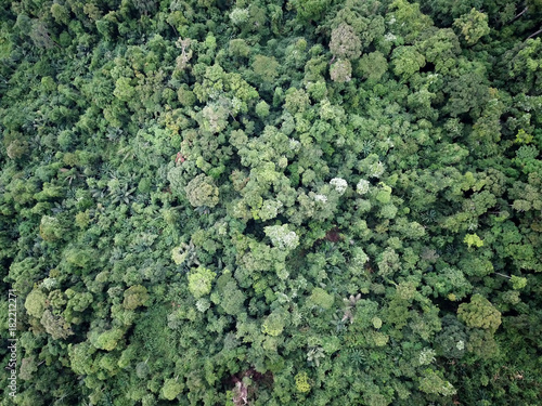 Fotobehang Olijf Rainforest. Aerial photo of forest and mountain landscape. Thailand, Southeast Asia