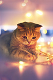Cat and Christmas lights - 182217893