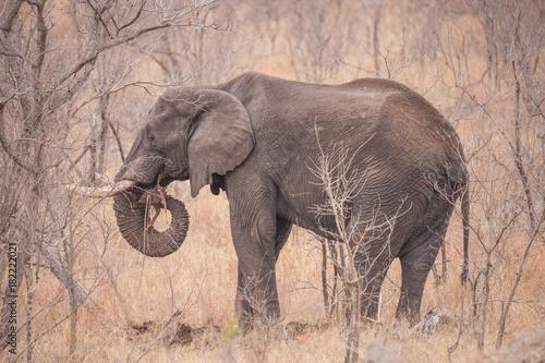 Staande foto Zalm Elefant