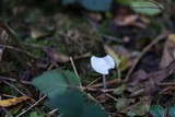 fragile small mushroom in forest - 182232066
