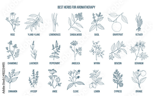 Best herbs for aromatherapy