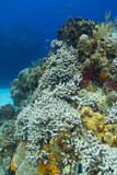 Dying coral reef with fish