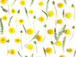 Pattern made from natural yellow wildflowers. Abstract floral composition. Top view, flat lay. Floral, plants background. Mother's Day, March 8 background.