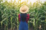 Happy farmer in the corn field - 182258811