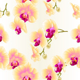 Seamless texture frame Beautiful  Orchid Yellow stem with flowers and  buds closeup vintage  vector editable illustration hand draw