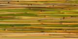 Grass stems as background. High Detail. - 182283873