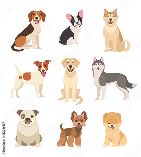 Dogs collection. Vector illustration of funny cartoon different breeds dogs in trendy flat style. Isolated on white.
