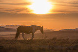 Wild Horse Silhouetted at Sunset