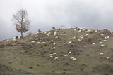 Rural landscape in northern spain - 182297497
