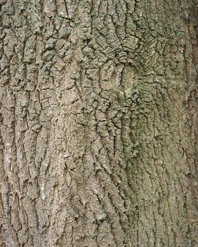 Deurstickers Brandhout textuur background of bark on old oak tree closeup
