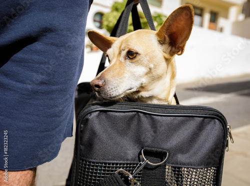 Staande foto Crazy dog dog in transport box or bag ready to travel
