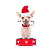 hungry santa claus  dog inside food bowl