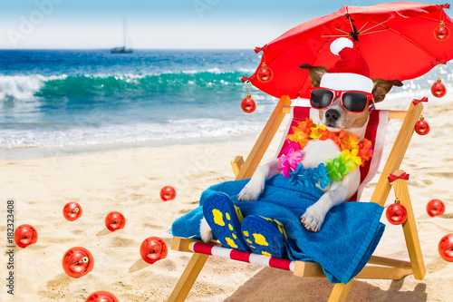 Staande foto Crazy dog dog in hammock as santa claus on christmas at the beach