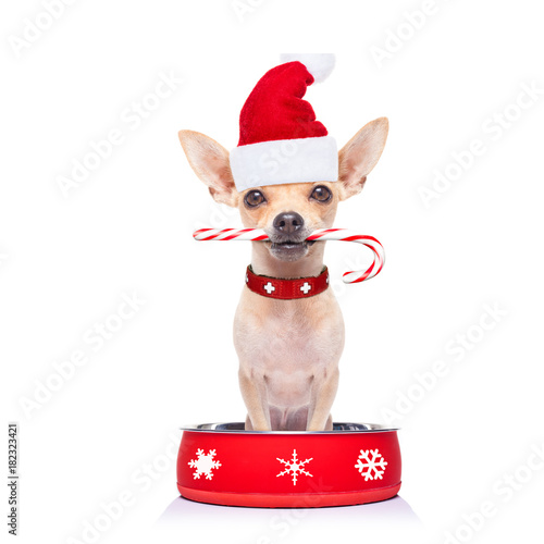 Staande foto Crazy dog hungry santa claus dog inside food bowl