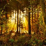 Sonnenstrahlen in einem mystischen Herbstwald im Morgennebel - 182326069