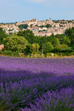 Village and lavender in Provence - 182327426