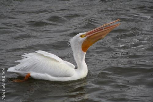 Aluminium Zwaan Pelican
