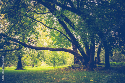 Foto op Aluminium Nachtblauw Green Crooked Trees in the Park Retro