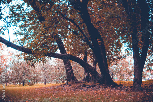 Foto op Plexiglas Diepbruine Green Crooked Trees in the Park Retro