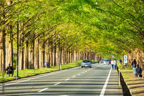 Sticker メタセコイア並木と道路