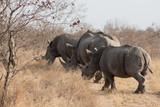 rhino_7 - 182367053