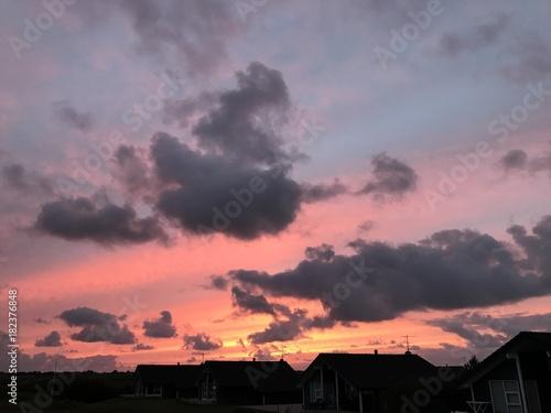 Foto op Plexiglas Lavendel Feld, Wiese, Hund, Pflanze, Sonne, Wolken, Strand, Sonnenuntergang, Meer, See, Frost, Tau,