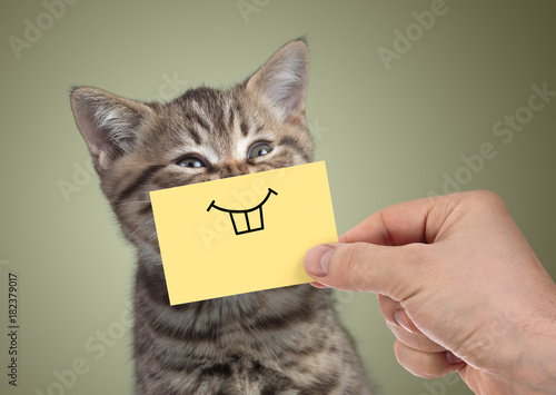 happy cat with funny smile on cardboard