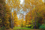 Autumn forest. Beautiful background, park in bright leaves. Road in the forest on a sunny afternoon. Green and orange nature background after the rain. The road is strewn with leaves of green grass. - 182385201