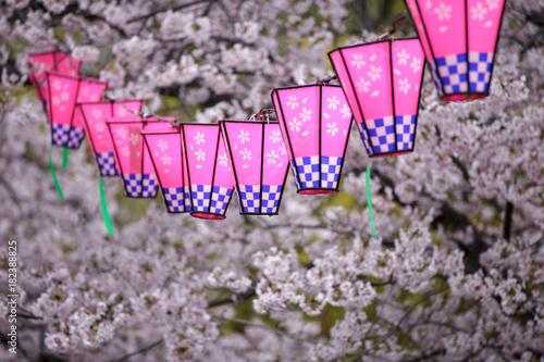 桜とランタン Poster