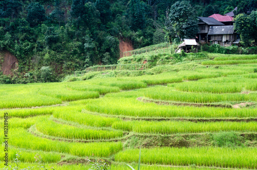 Deurstickers Rijstvelden Ladder Rice Fields at Mae Hong Son Thailand