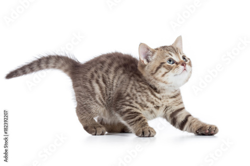 Frightened kitten looking up isolated