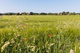 Gräser am Feldrand, Anfang Juni, Deutschland - 182396670