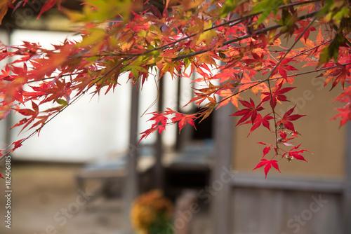 Papiers peints Miel 自然 紅葉のある風景