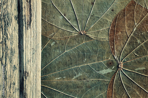 Old dried leaves with wood, natural abstract background, color toned.