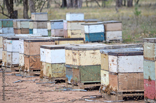 Aluminium Bee Colorful wooden bee boxes in woodland in rural NSW, Australia