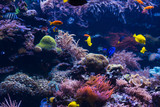tropical Fish. Underwater world landscape