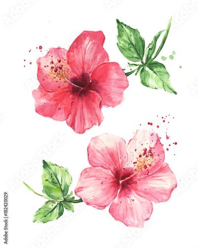 kwiaty-hibiskusa-malarstwo-akwarelowe