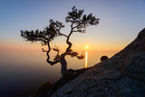 Alone tree on the edge of the cliff against the backdrop of the Black Sea at sunset time. Picturesque landscape with mountains and orange sky - 182420841
