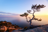 Alone tree on the edge of the cliff against the backdrop of the Black Sea at sunset time. Picturesque landscape with mountains and orange sky - 182420889