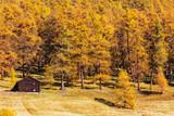 Livigno - Valtellina (IT) - Antica baita in legno in ambiente autunnale - 182422473