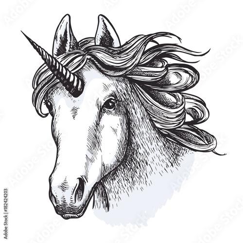 Unicorn horse mystic magic animal vector sketch