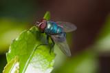 fly - 182427286