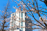 Cherry blossoms in central Tokyo, Japan - 182428039