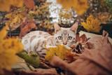 Cat in Fall Foliage - 182429045