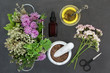 Herbal medicine used in natural alternative remedies with fresh herbs and flowers with valerian, Valium substitute, in a marble mortar with pestle, aromatherapy essential oil bottle and scissors.