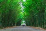 Path through a bamboo forest.